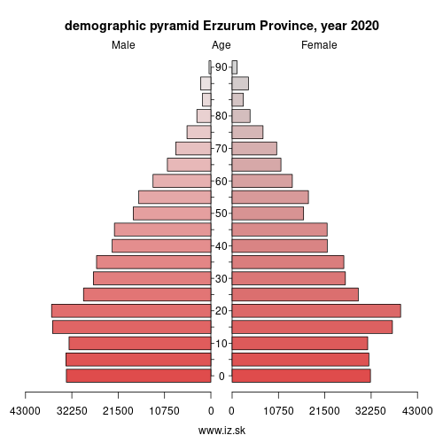 demographic pyramid TRA11 Erzurum Province